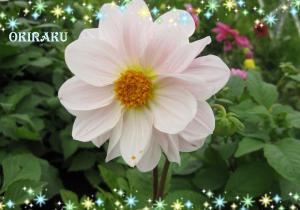 ハナックのお花