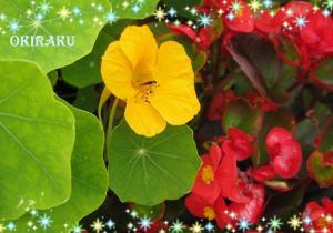 ハナックのお花その2
