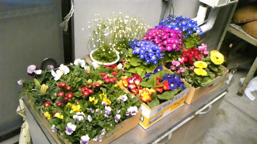発表会のお花たち