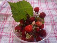 自家菜園のラズベリーです。