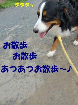 あつあつお散歩~♪ふふ~ん♪