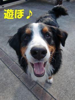 犬が笑えばこちらもニコニコ。