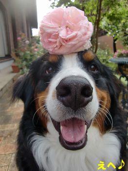 お花も咲いてるんだよ!