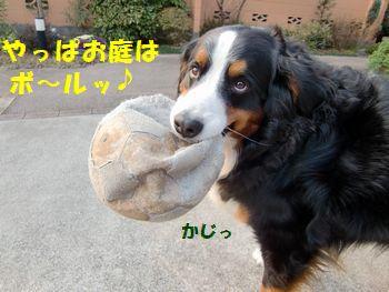 やっぱお庭はボールだね!