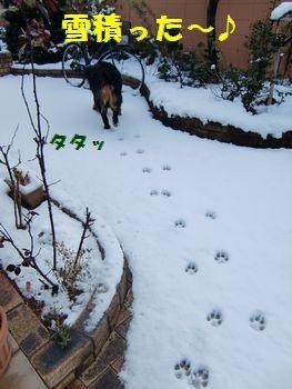雪積もったよ~!!