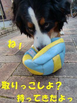 これ!このボール持ってきたから!