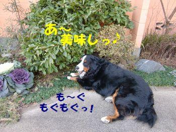 お庭で食べるガムはんま~♪