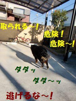 逃げるが勝ち~!!
