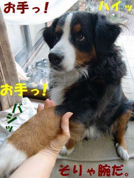 お手っ!お手っ!!!
