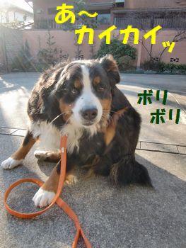 なんかカイイ~!!