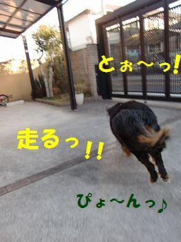 ぴょんぴょん行くのだ~っ!!