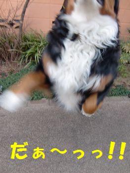飛んでみる~!!