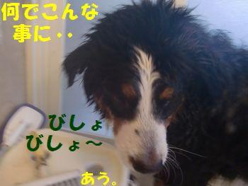 なんで僕濡れてんの~!?