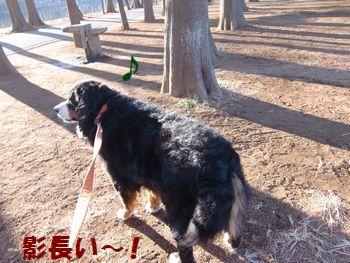 影長散歩~!