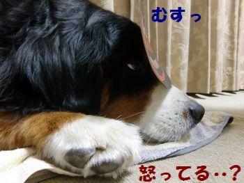 僕!寝てたのに!!