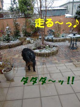 お庭に向かって走る~っ!