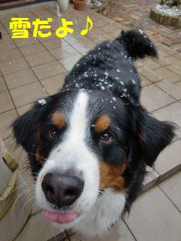 やっと雪ふった!!