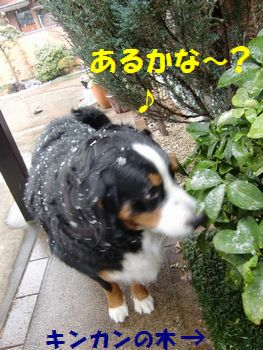 雪でもキンカンチェック!!
