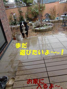 まだ遊ぶの~!!雪はどこ~!?
