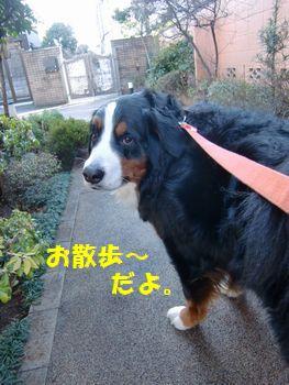 つるつるなお散歩~!!