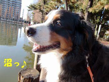 はぁ~!川くらい渡りたいのに~。
