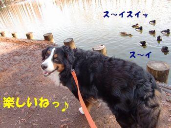 白くてもお散歩楽し~!