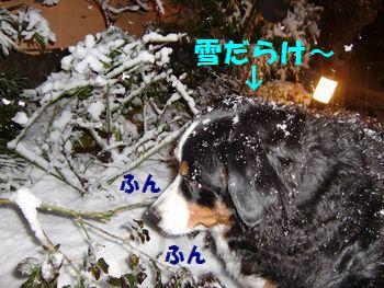 雪が背中につもる~。