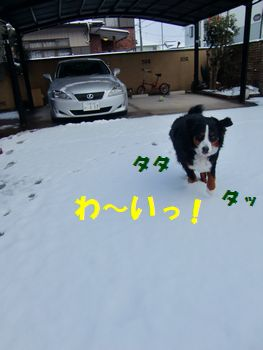 た~のしいね~!雪って!