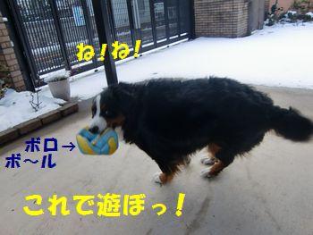 雪と一緒にボール!