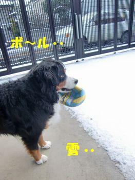 ボールも好き・・雪も楽しい・・