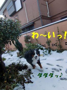 雪で走っちゃうよ~っ!!