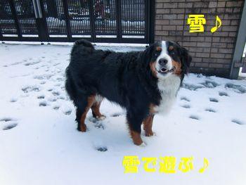 じゃ、今日は雪~!
