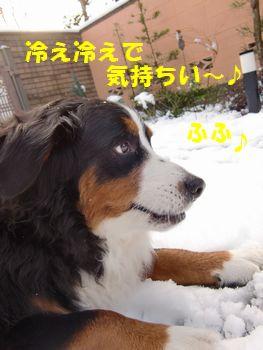 お腹冷たくて最高~!