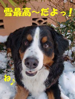 雪っていいよね~!!
