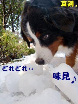 真剣に雪味見だよ!!