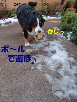 今日もボール遊び~!