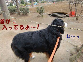 首もダメなの~!?