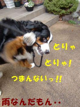 雨きらい~!!とりゃ~っ!!