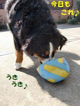 今日もこのボールでいいの~♪