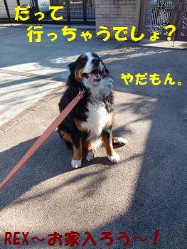 お留守番だもん~!!