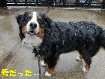 雪降ってんの・・・冷たいね~。