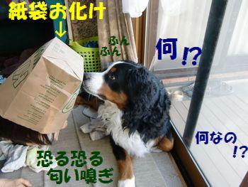 紙袋お化け来た~!?