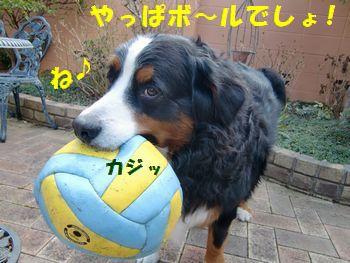ど~考えてもボールで遊ぶでしょ!