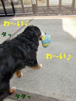 走り回っちゃうよ~!!
