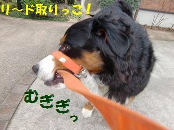 リード取りっこすんの~!!