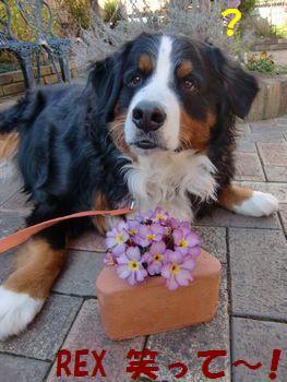え?え?お花と撮るの??