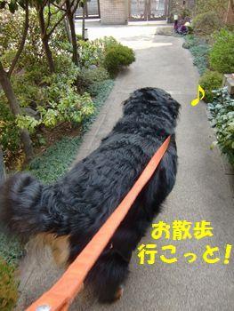お散歩に出発~!!
