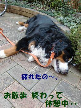 お散歩帰りは疲れるの・・・。