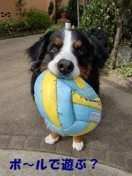 ボール持ってきたの。
