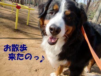 今日はいい天気~!オサンポ日和っ♪